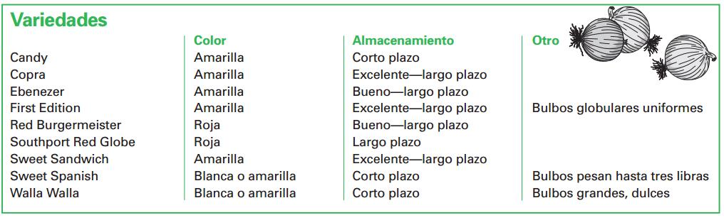 variedades de cebolla