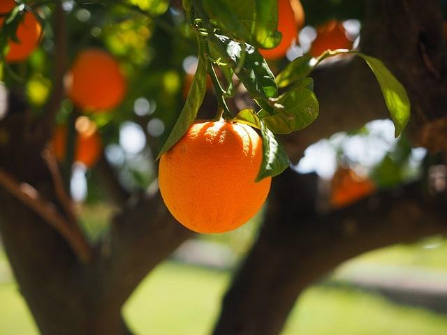 Sembrar naranjas