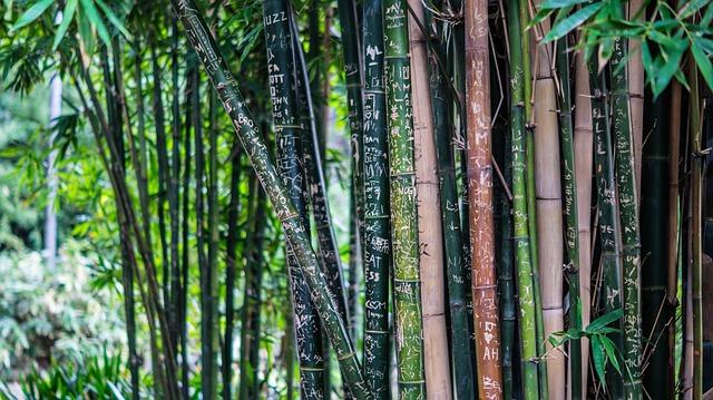 Como plantar bambu cuidados plantaci n y requisitos - Cultivo del bambu ...