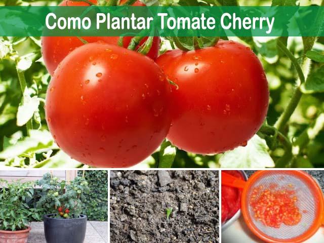 Sembrar tomates en macetas elegant semillas paquete - Tomates cherry en maceta ...