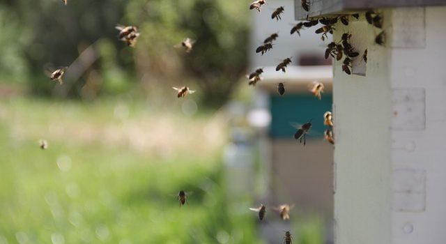 Repelentes para abejas