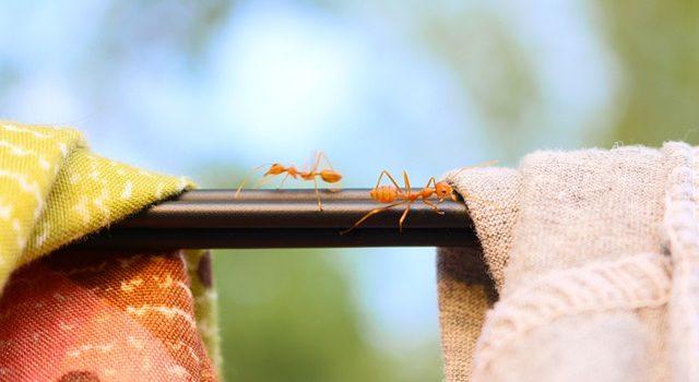 Repelentes para hormigas