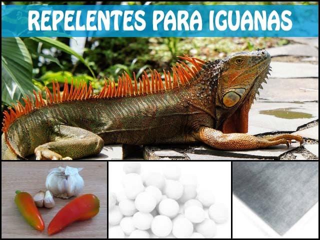 Repelentes para iguanas