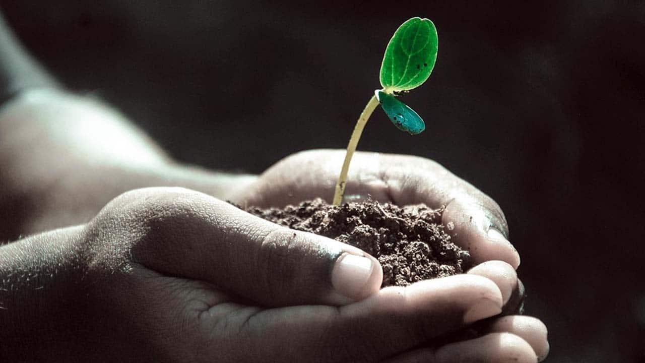 Tipos de suelo para el cultivo de plantas