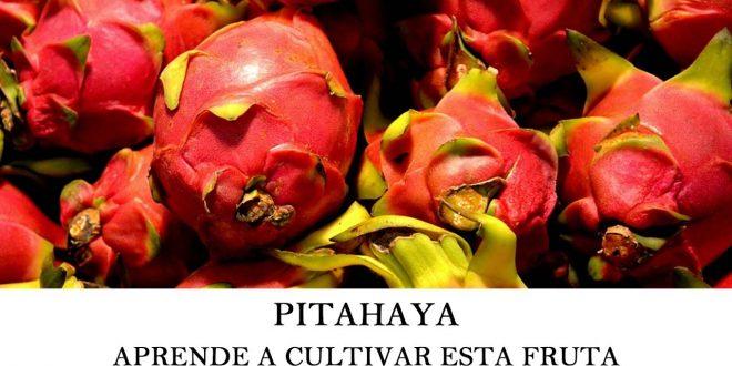 Aprende a cultivar pitahaya
