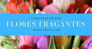 Flores Fragantes ideales para cultivar en tu hogar