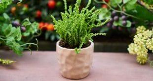 Macetohuerto - Guía de cultivo de verduras en macetas