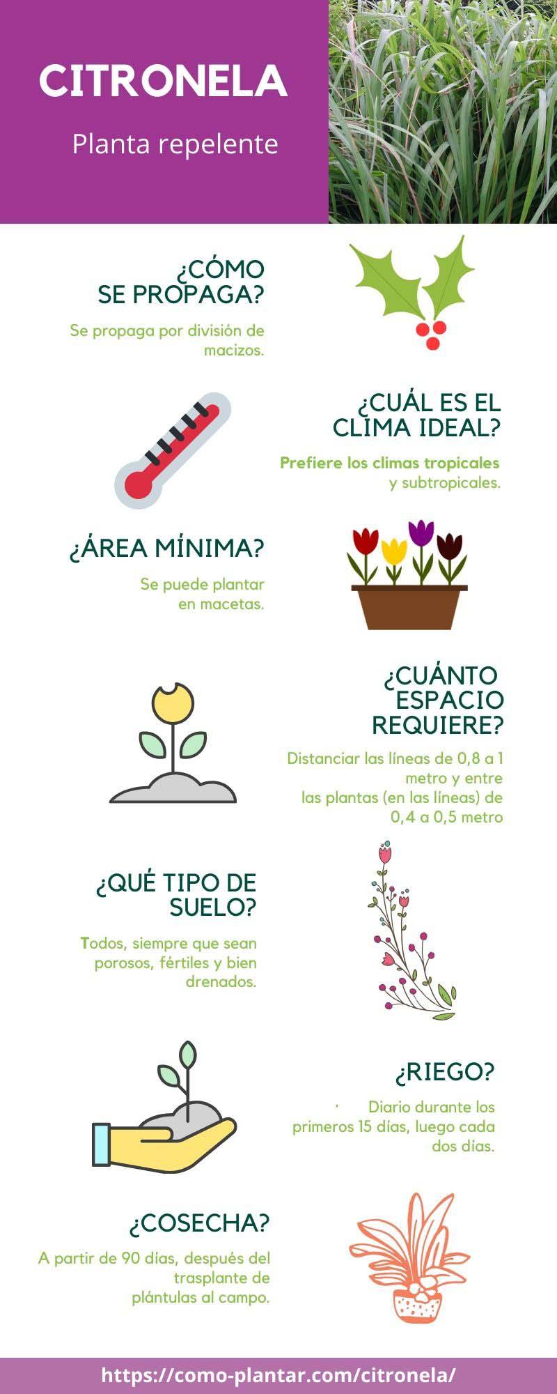 Guía para el cultivo de citronela