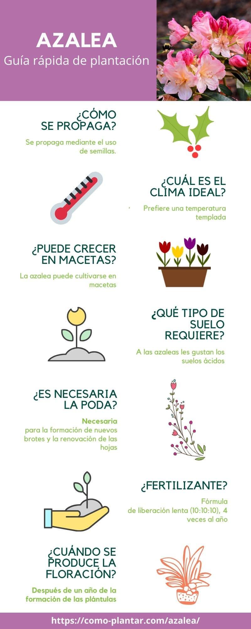 Guía para el cultivo de la azalea
