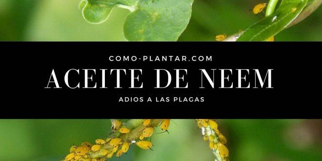 Aceite de Neem-Insecticida y fungicida
