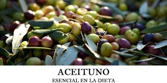 Cómo plantar aceituno u olivo Olea europaea