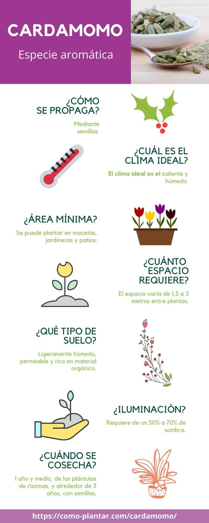 Guía para el cultivo de cardamomo