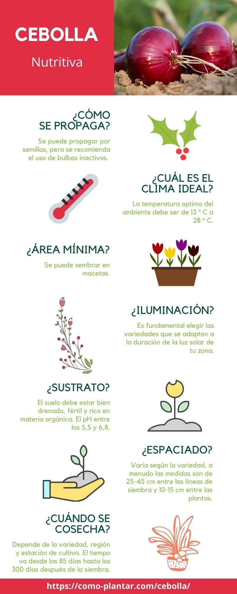 Guía para el cultivo de la cebolla