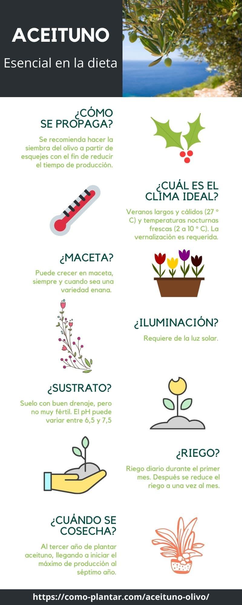 Guía para el cultivo del aceituno y obtención de aceituna u oliva