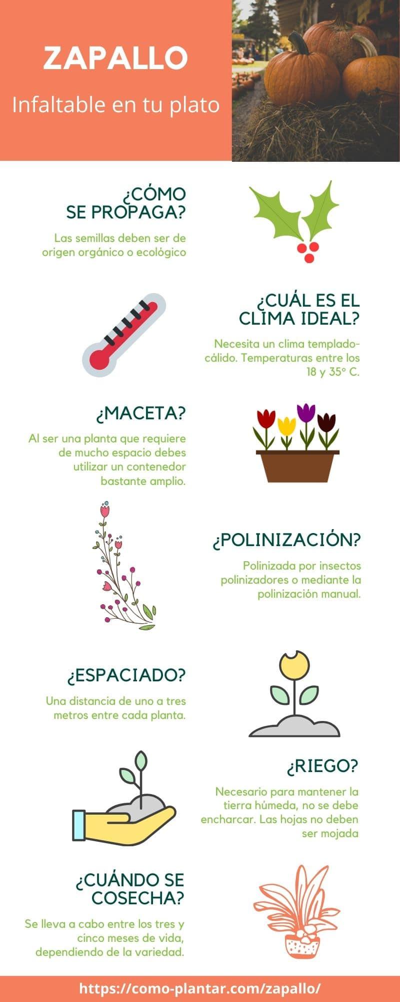 Guía para el cultivo del zapallo