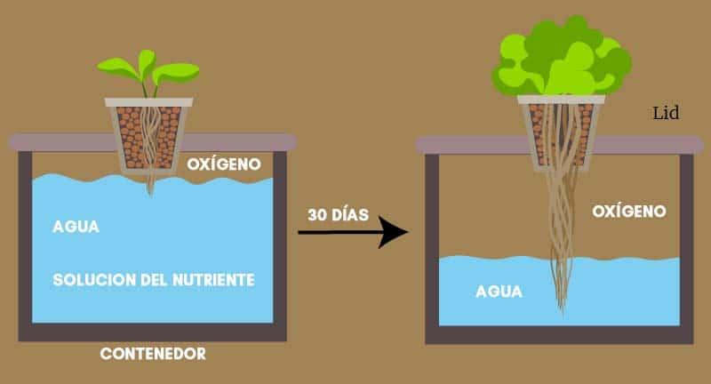 Método Kratky para hidroponía