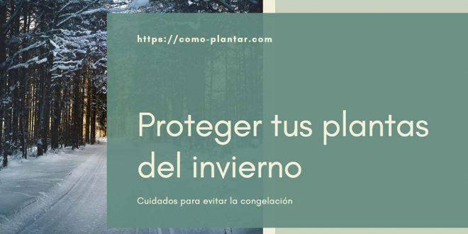 Proteger tus plantas del invierno y evitar la congelación