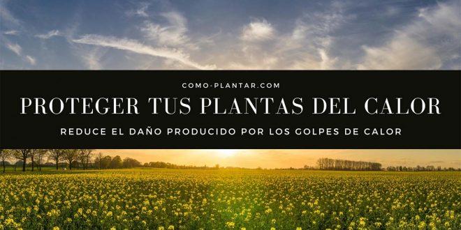 Aprende como proteger a tus plantas del calor