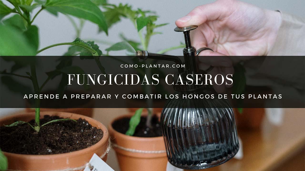 Fungicidas caseros para combatir los hongos de las plantas