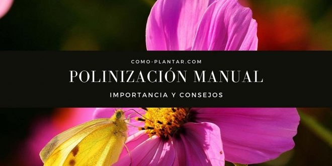 Importancia de la polinización Manual