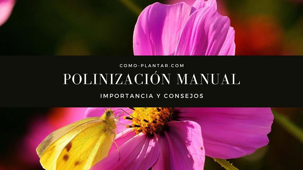 Importancia de la polinización Manual