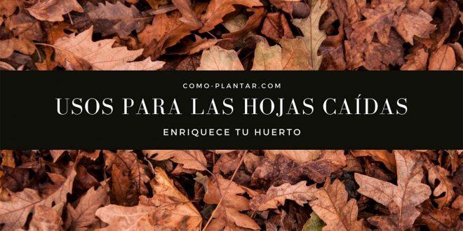 Usos para las hojas caídas de otoño