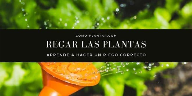Aprende a regar las plantas correctamente