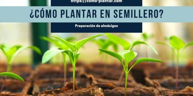 Cómo plantar en semillero