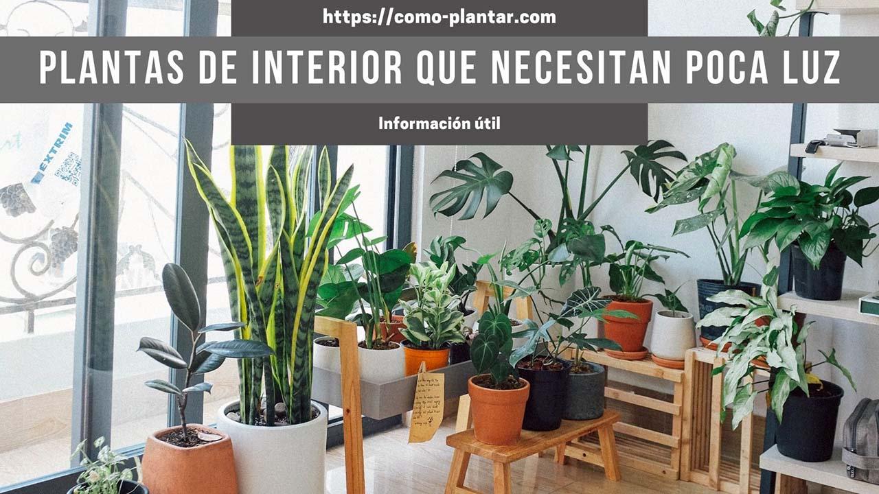 Conoce algunas plantas de interior que necesitan poca luz