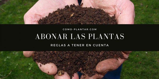 Consejos a saber al abonar las plantas