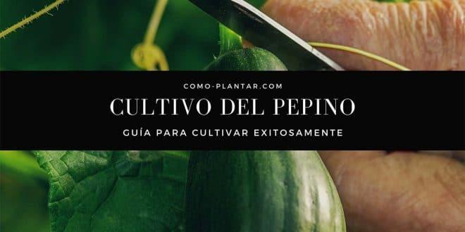 Guía de cultivo del pepino