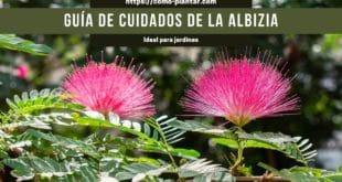 Guía de cuidados y cultivo de la albizia