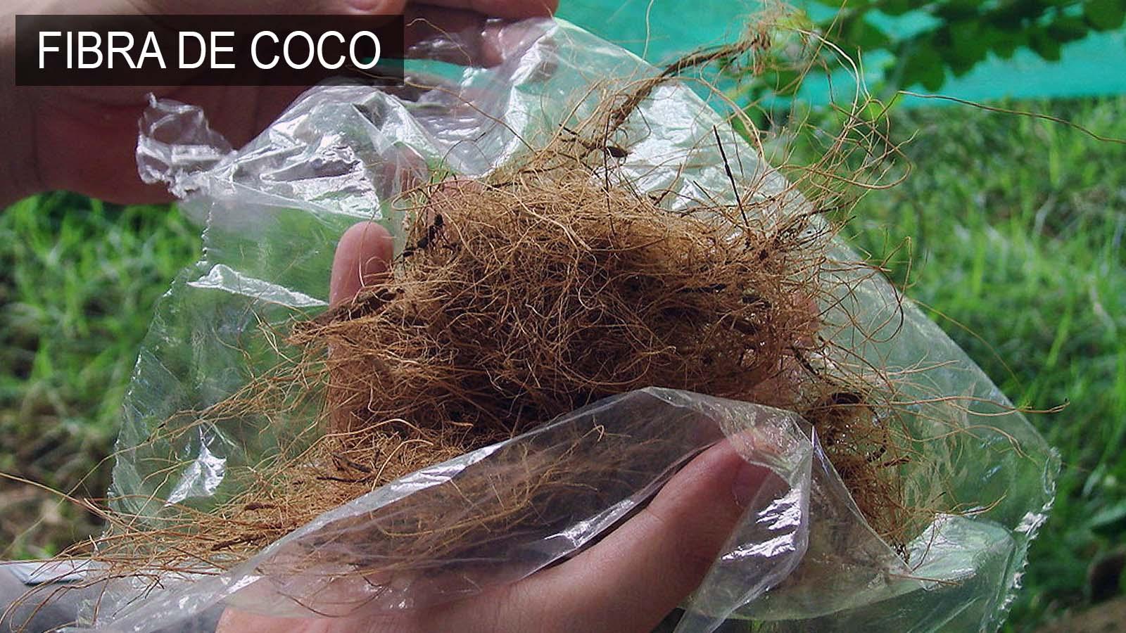 La Fibra de Coco o Bonote es un mantillo orgánico